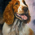 'Welsh Springer'