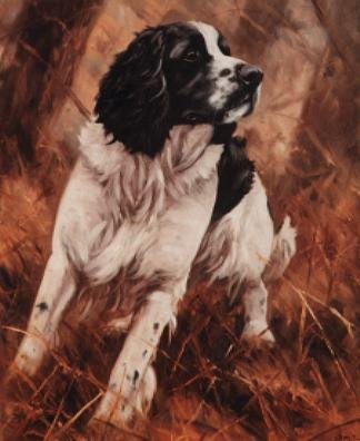 Black White Springer