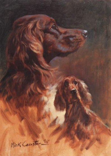 Irish Setter Head Study