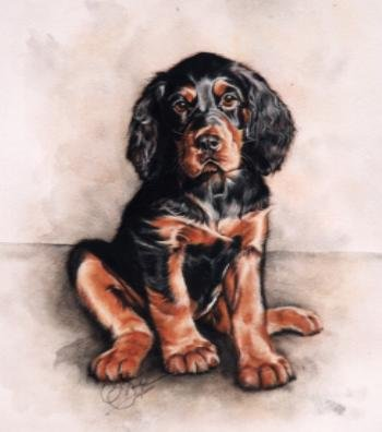 'Gordon Setter Pup'
