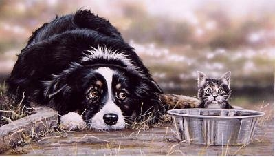 'Collie Troubles'
