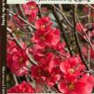 VO3010P  DVD/BOOK SET Blossoms in Spring Qigong taoist exercise serenity harmony Caldwell Mancuso