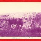 Old Postcard FORMOSA Taiwan Under Japanese Rule Buffalo Boy #EF22