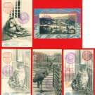 Lot of 5 JAPAN Japanese Postcards Kyoto Zoo in 1906 Orangutan Leopard Emeu #EO12