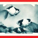 Vintage JAPAN Japanese Postcard Goldfish #EO26
