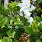 Spring Bumblebee earrings