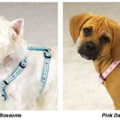 Fashion Harnesses Doggie Collar Harness Clothes (SM)