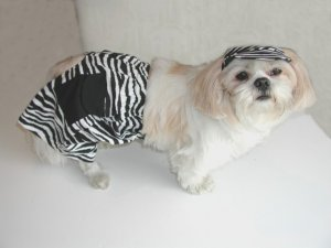 Zebra Jammer Shorts Bathing Suit Boys Dog Clothes XXXsm-Small