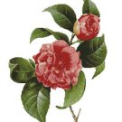 Counted Cross Stitch Kit - FLOWER - COMMON CAMELLIA