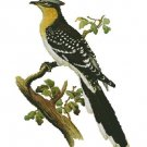 Counted Cross Stitch Kit - GREAT SPOTTED CUCKOO - JOHN GOULD