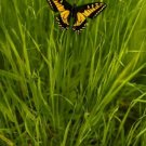 Fine Art Photography Modern Abstract Butterfly  GLY7