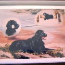 Flat Coated Retriever #1 Dog Notecards Envelopes Set - Maystead - NEW