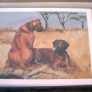 Rhodesian Ridgeback #6 Dog Notecards Envelopes Set - Maystead - NEW