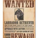 CANVAS: Black Lab Wanted