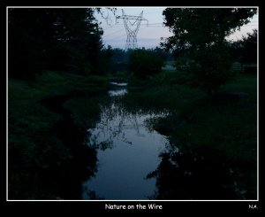 Nature on the wire