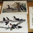 4 Amazing World of Nature Bird Prints - No Frames
