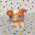 Littlest Pet Shop #37 Poodle~Playful Puppies