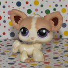 Littlest Pet Shop #438 Tan & Cream Chihuahua Puppy