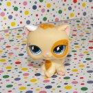 Littlest Pet Shop #521 Cream & Orange Persian Kitty Cat