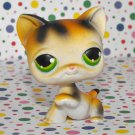 Littlest Pet Shop #27 Calico Kitty Cat