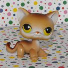 Littlest Pet Shop #19 Siamese Kitty Cat
