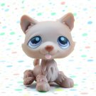 Littlest Pet Shop #39 Brown husky Dog ~ LPS  Winter Puppy