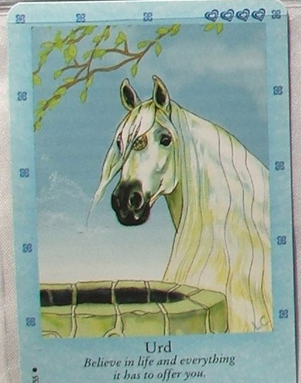 Bella Sara Northern Lights Card #25 Urd