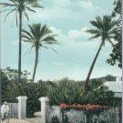 Cocoanut Palms, Bermuda Vintage Postcard