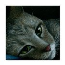 Ceramic Tile Coaster from art painting Cat 420