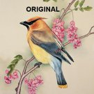 Cedar Waxwing Cross Stitch Pattern Birds ETP