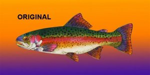 Beautiful Trout Cross Stitch Pattern Fish ETP