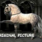 Spanish Stallion Cross Stitch Pattern Horses ETP