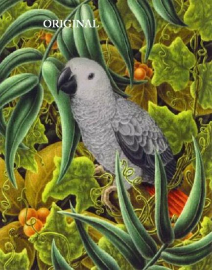 Tropical African Grey Cross Stitch Pattern Parrots Birds ETP