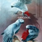 3 African Greys Cross Stitch Pattern Parrots Birds ETP