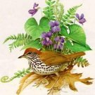 Wood Thrush Cross Stitch Pattern Birds ETP