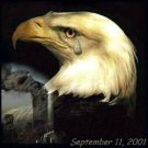 911 SAD EAGLE Cross Stitch Pattern Birds ETP
