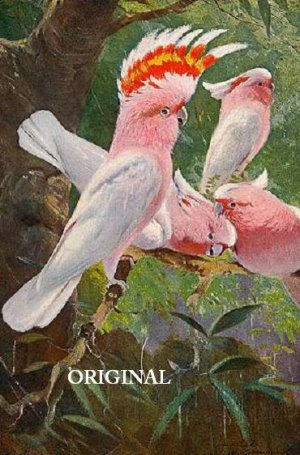 Leadbeater's Cockatoo Cross Stitch Pattern Parrots Bird ETP