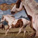 Spotted Ponies 2 Cross Stitch Pattern Western Horses ~ETP~