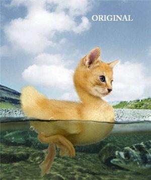 Kitten Duckling Cross Stitch Pattern Cats Fantasy ~ETP~