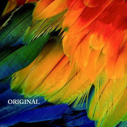 Parrot Feathers Cross Stitch Pattern Birds ETP