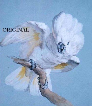 Umbrella Cockatoo #2 Cross Stitch Pattern Parrots Birds ETP