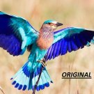 Lilac Breasted Roller 2... ~Counted~ Cross Stitch Pattern ETP