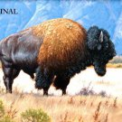 Plains Buffalo... ~Counted~ Cross Stitch Pattern ~Computer Generated~... ETP