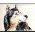 8 Watercolor Siberian Husky Greeting Note Cards Notecards