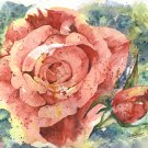 Original Watercolor Face of a Rose Painting