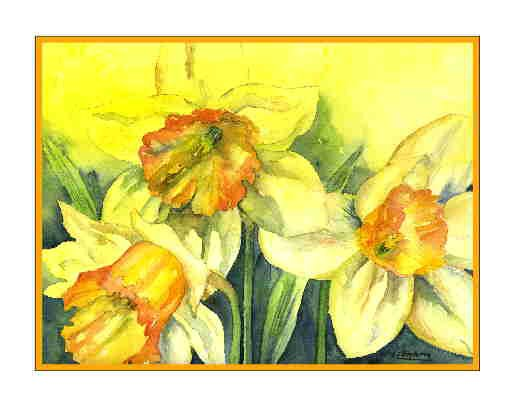 8 Watercolor Fleeting Daffodil Note Cards Notecards