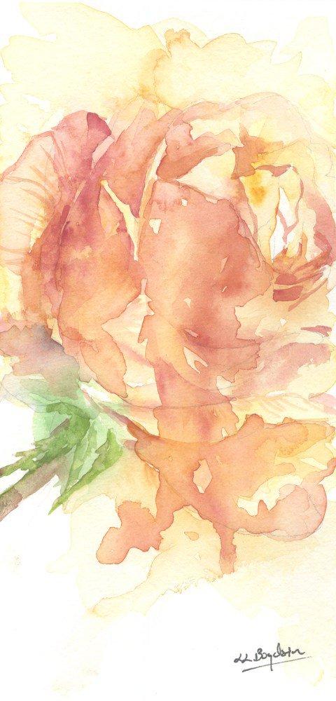 Original Watercolor Apricot Rose Painting