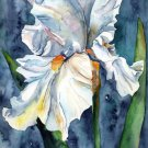 Watercolor White Iris Giclee Print Art