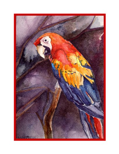 Watercolor Red Macaw Parrot Note Cards