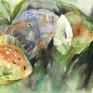 Free Shipping Original Discus Watercolor and Ink Painting